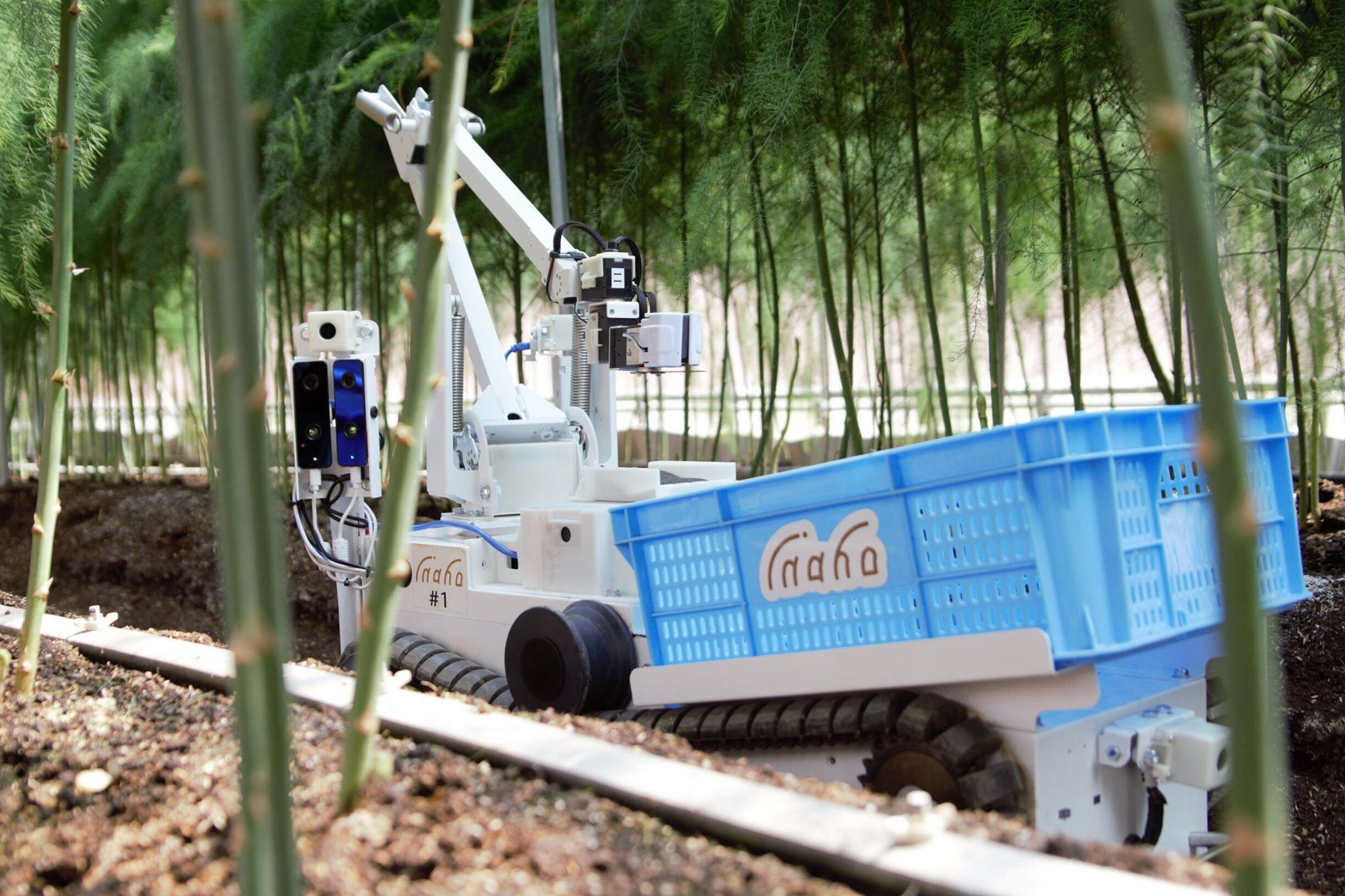 inahoの自動野菜収穫ロボットがアスパラガスを採っている様子
