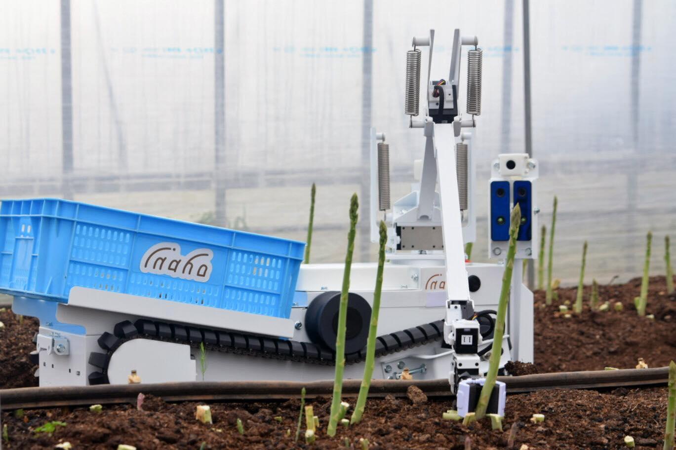 inaho自動野菜収穫ロボットがアスパラガスを取っている様子